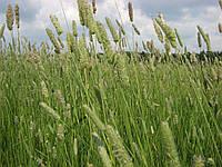 """Семена травы для сенокоса (Суміш багаторічних трав """"Сінокосна"""")"""