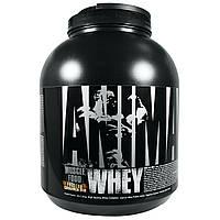Universal Nutrition, Animal, сывороточный протеин для мышц, глазированная булочка с корицей, 4 фунта (1,81 кг)