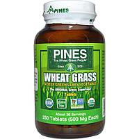 Pines International, Трава пшеницы, 500 мг, 250 таблеток
