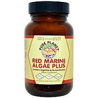 Pure Planet, Добавка красных морских водорослей, 500 мг, 90 вегетарианских капсул