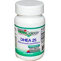 Nutricology, ДГЭА 25, микронизированная липидная матрица, 60 таблеток с насечкой