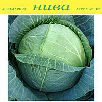 Новатор F1 семена капусты белокачанной поздней Syngenta 500 семян