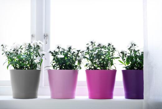 Растения, кашпо и подставки IKEA