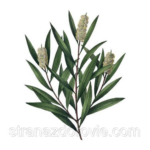 Антисептический аромабальзам «Чайное дерево»