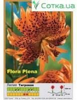 Тигровая махровая лилия Flore Pleno