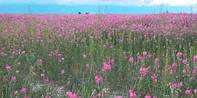 Трава эспарцет медоносный 15 кг, Fazenda