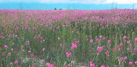 Семена трава эспарцет медоносный 15 кг Fazenda