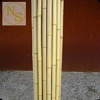 Бамбуковый ствол светлый  2-3см., 4