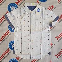 Котоновая подростковая рубашка на мальчика GLO-STORY