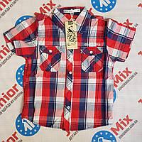 Детская котоновая рубашка в клеточку на мальчика GLO-STORY, фото 1