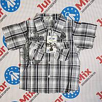Рубашка в клеточку на  мальчика  D-H kids