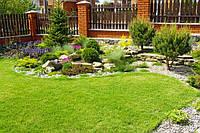 Какие растения лучше всего использовать при оформлении газона?
