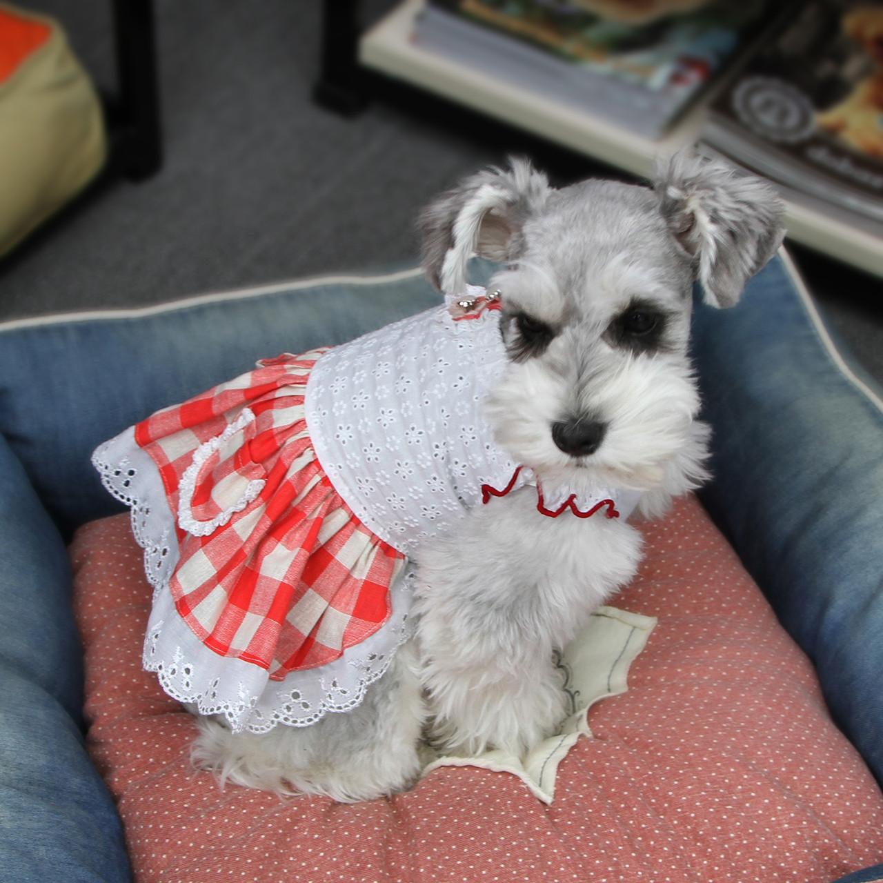 Платье для собак Dobaz Добаз, Toscana красный