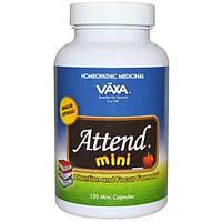 Vaxa International, Attend Mini, поддержка внимания, 120 мини капсул