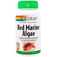 Solaray, Красные морские водоросли, 375 мг, 100 вегетарианских капсул