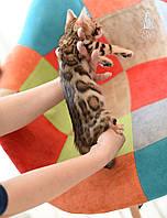 Мальчик 2. Бенгальский котёнок питомника Royal Cats