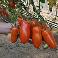 Семена томата Айдар F1 250 семян Clause