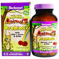 Bluebonnet Nutrition, Супер Земля, пробиотик Животные тропических лесов, натуральный малиновый вкус, 60 жевательных пластинок