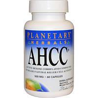 Planetary Herbals, AHCC (Активный гексо состав), 500 мг, 60 капсул