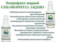 Иммунитет.Супер продукт. Кроветворение.Обновление тканей.Хлорофилл жидкий.