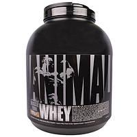 """Universal Nutrition, """"Животная сыворотка"""", сывороточный белок для мышц со вкусом шоколада и кокоса, 4 фунта (1,81 кг)"""