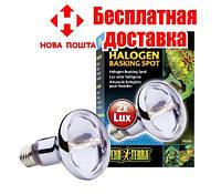 Лампа Exo Terra Sun Glo Halogen E27, 50 Вт.