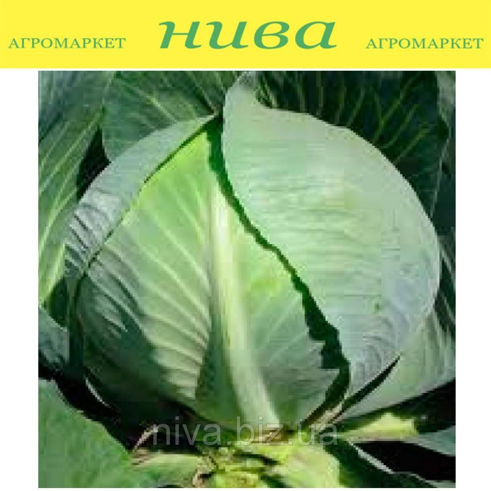 Структон F1 семена капусты белокачанной поздней калибр Hazera 2 500 семян