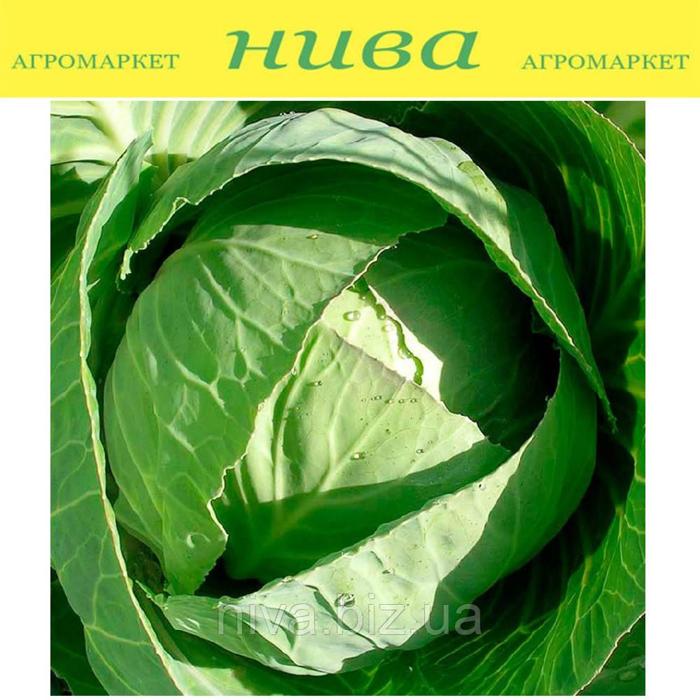 Белоснежка семена капусты поздней Hortus 500 г