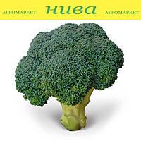 КС (KS) 355 F1 семена капусты брокколи Kitano Seeds 1 000 семян