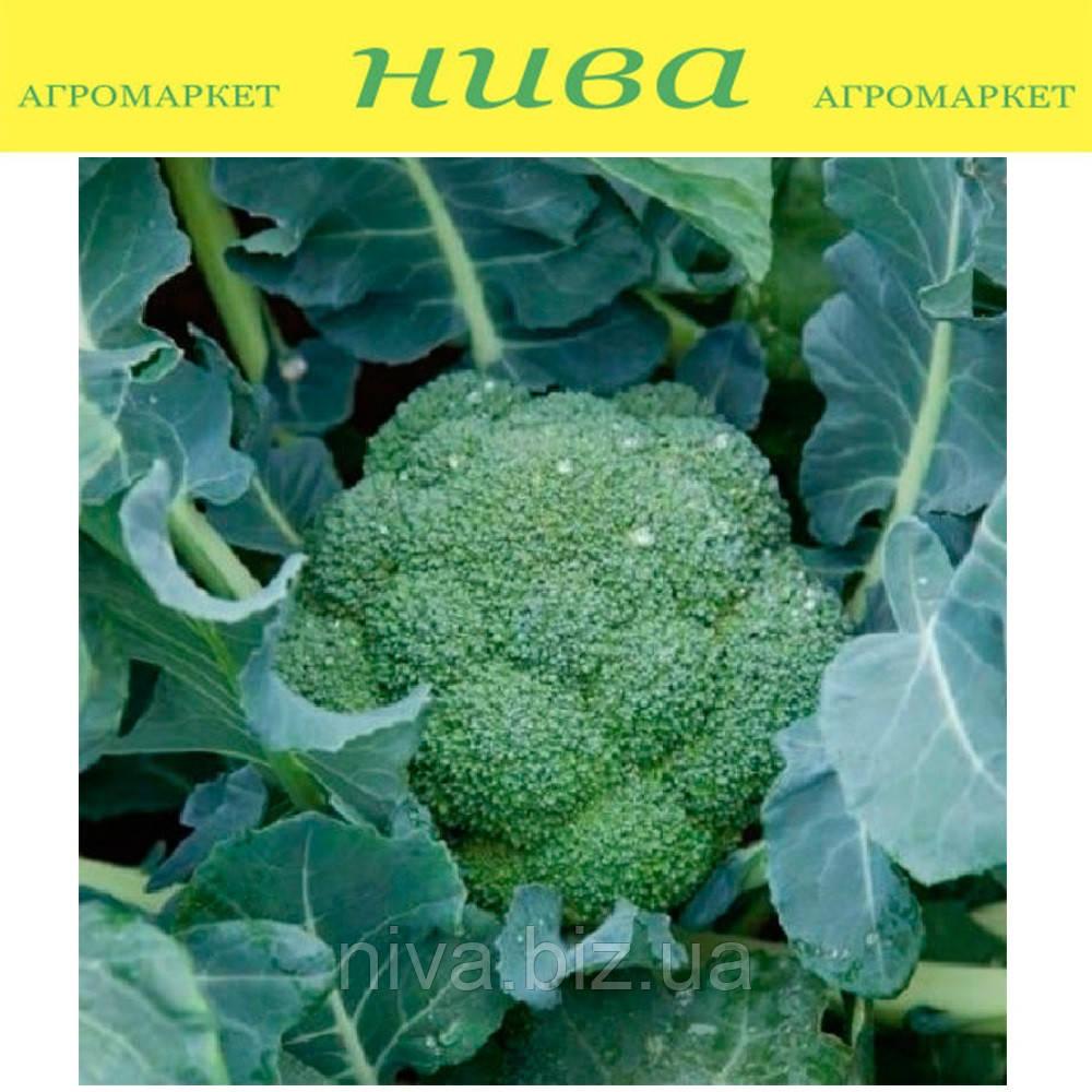 Регги F1 (Reggi F1) семена капусты брокколи калибр. Rijk Zwaan 1 000 семян