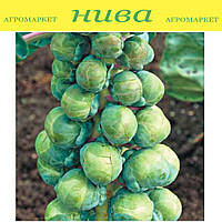 Абакус F1 семена капусты брюссельской Syngenta 2 500 семян