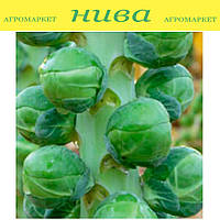 Диабло F1 (Diablo F1) семена капусты брюсельской Bejo 1 000 семян
