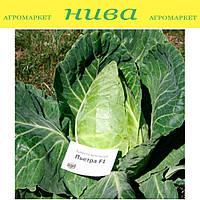 Петра F1 семена капусты белокачанной ранней конической Agri Saaten 2 500 семян