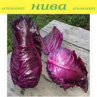 Калибос F1 семена капусты краснокочанной среднепоздней конической Moravoseed 1 000 г