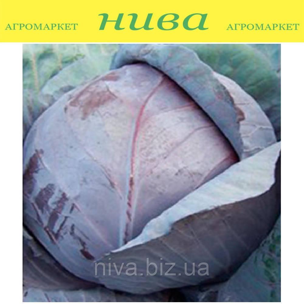 Модерат F1 семена капусты краснокочанной Moravoseed 1 000 г
