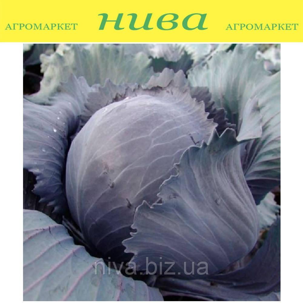 Квит F1 семена капусты краснокочанной Moravoseed 1 000 г