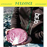 Климаро F1 (Klimaro F1) семена капусты краснокачанной поздней Bejo 2 500 семян