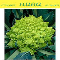 Вероника F1 (Veronica F1) семена капусты романеско Bejo 2 500 семян