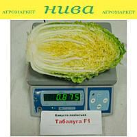 Табалуга F1 семена капусты пекинской Sakata 1 000 семян
