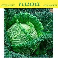 Блистра F1 семена капусты савойской Moravoseed 1 000 г