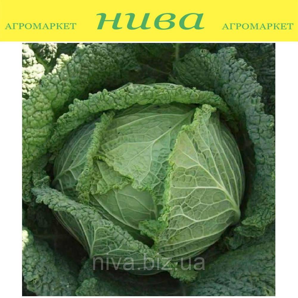 Мелиса F1 (Melissa F1) семена капусты савойской Bejo 2 500 семян