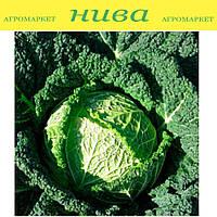 Серпантин F1 семена капусты савойской Nickerson Zwаan 2 500 семян