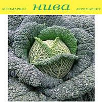 Турмалин F1 семена капусты савойской Hazera 2 500 семян