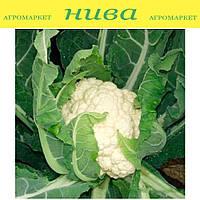 Авизо F1 семена капусты цветной средне-ранней Clause 10 000 семян