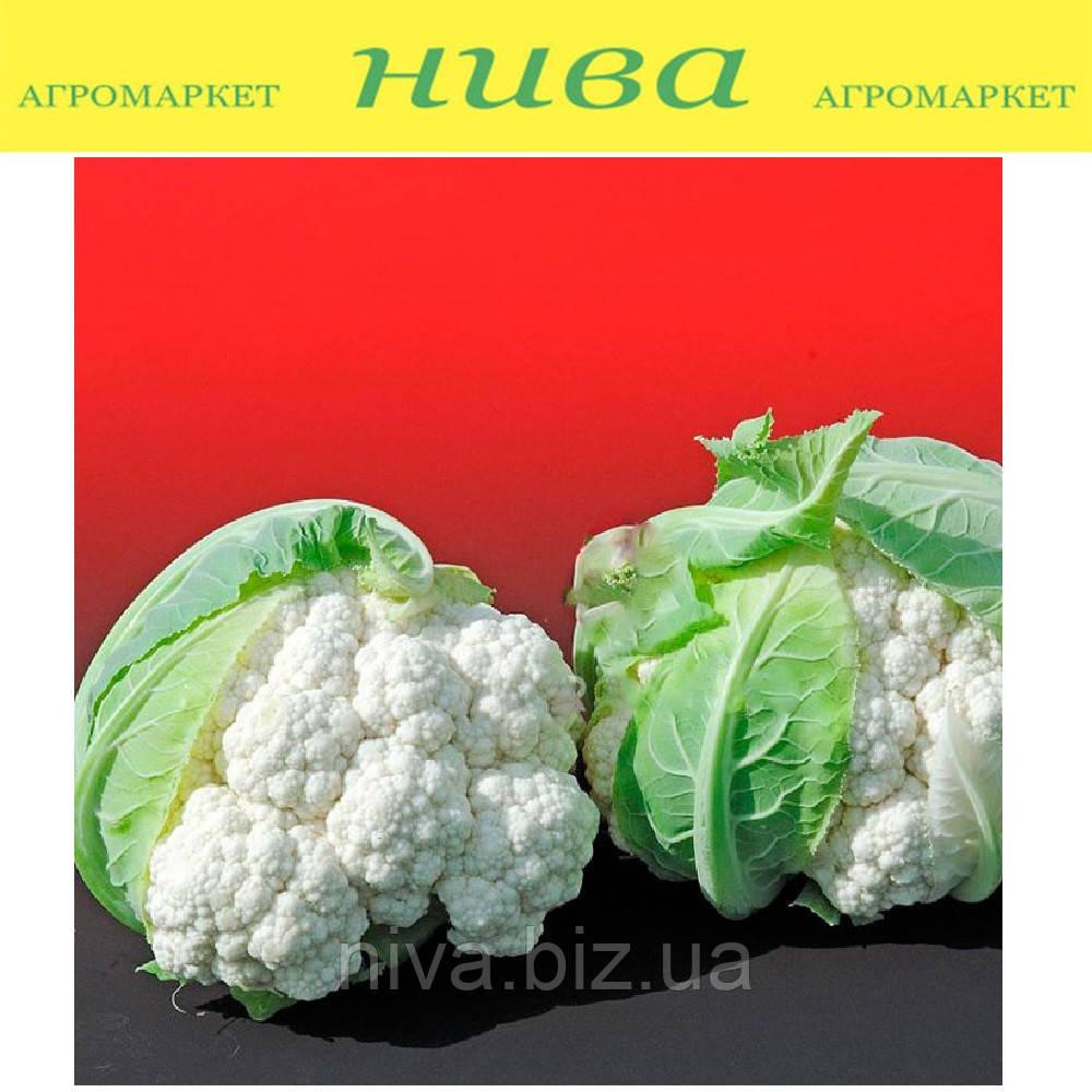 Альтамира F1 (Altamira F1) семена капусты цветной Bejo 2 500 семян