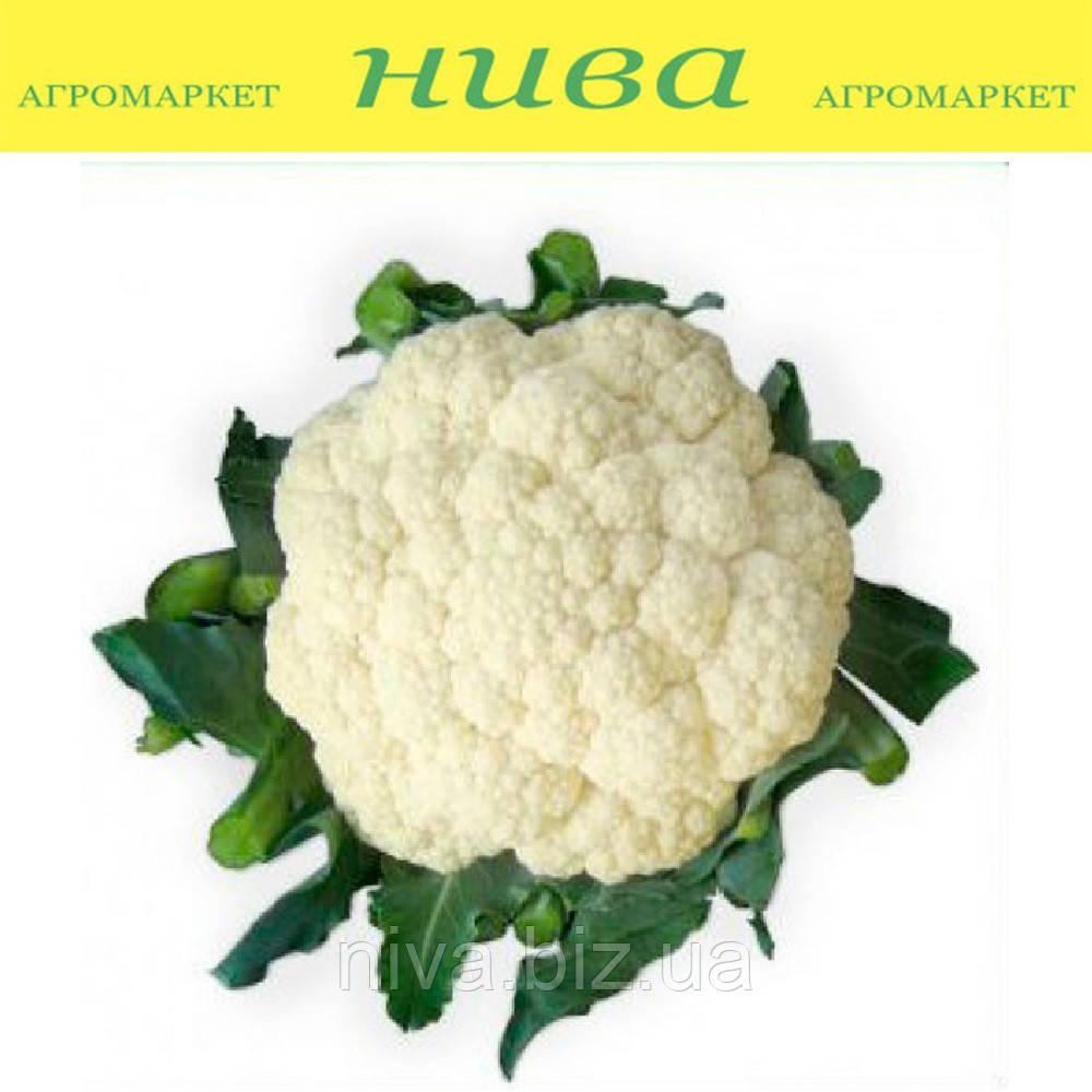 Ванза (КС 35) F1 насіння капусти кольорової Kitano Seeds 1 000 насінин