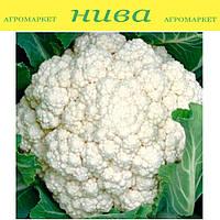 Инклайн F1 семена капусты цветной Sakata 1 000 семян
