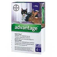Адвантейдж капли для кошек и кроликов от 4 кг (1 пипетка по 0.8 мл)