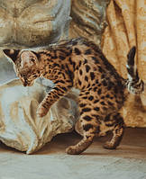 Кошка Ашера или Cаванна F1? В чем разница?