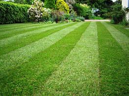 Озеленение участка, вертикальное озеленение участка